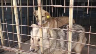 2017.01.30 Сюжет о приюте для бродячих собак