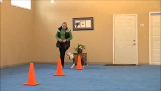 Gemma (old English Bulldog) Dog Training Video