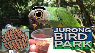Jurong Bird Park and Science Centre with Bird feeding and Bird Show- Top Things To do in Singapore
