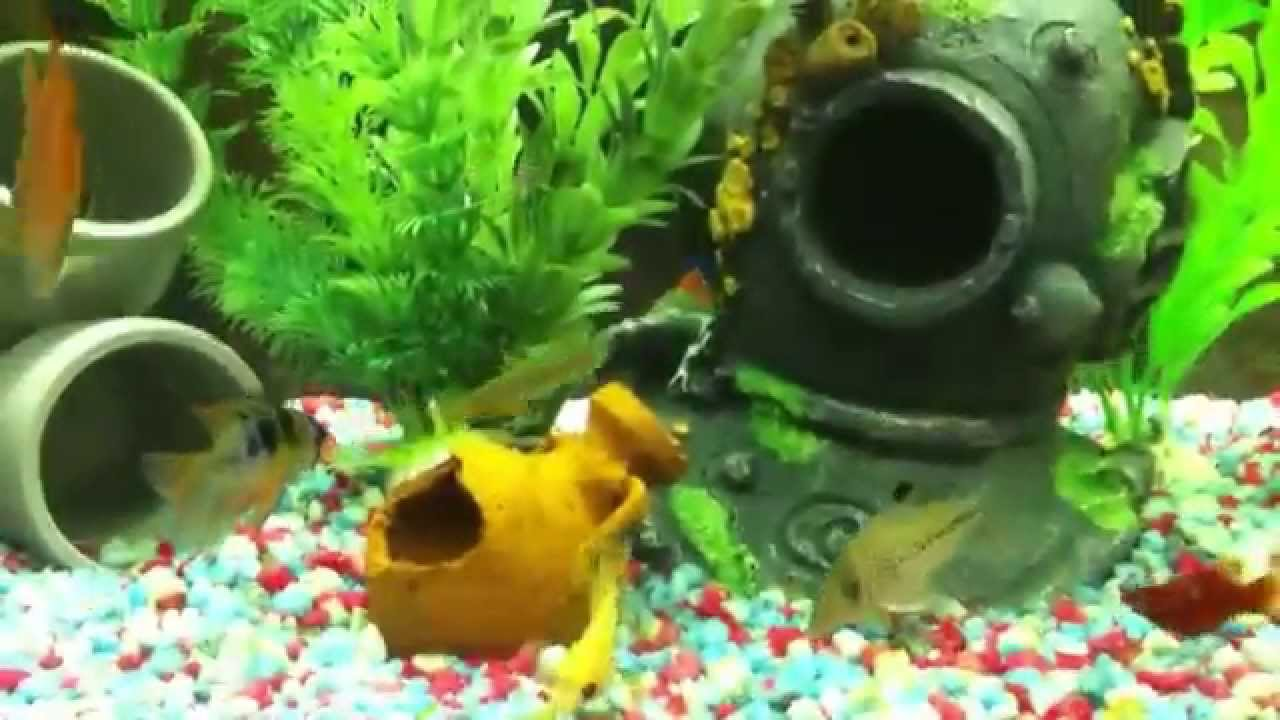 Acuario peces tropicales 150 l pangasius pez cuchillo for Peces tropicales acuario
