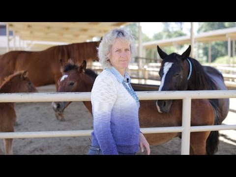 Alison Van Eenennaam: GMO feed safe for animals