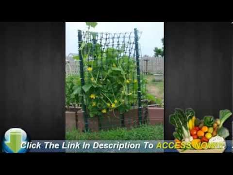 How To Start A Vegetable Garden From Scratch!