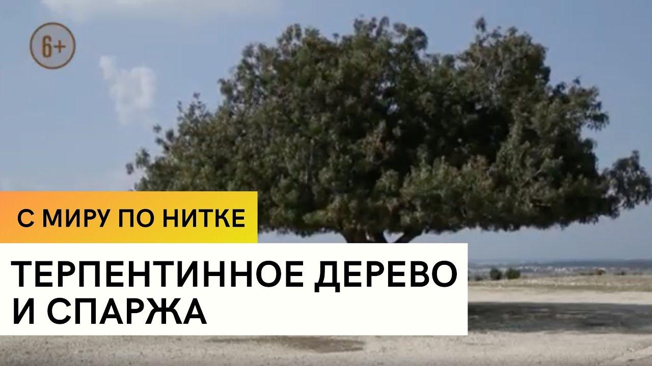 Терпентинное дерево и спаржа / С миру по нитке / 8 серия