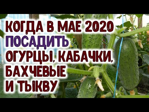 Лучшие дни для посева семян огурцов, кабачков, арбузов, дынь и тыквы в мае 2020 года. Сеем семена в   астропрогноз   агропрогноз   календарь   горяченко   посевной   дачников   гороскоп   лунный   май_2020   раиса