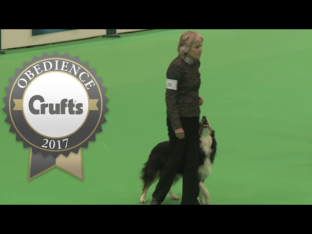 Obedience Championship - Dogs - Part 10 | Crufts 2017