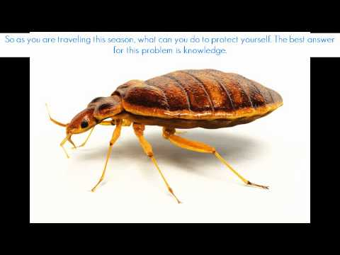 how to kill bed bugs quickly