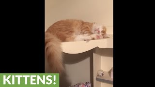 Cat loves food so much he dreams about eating