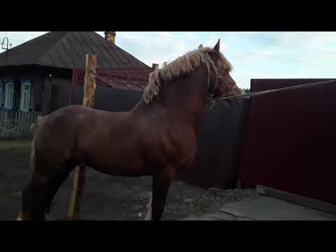 Продажа лошадей Талица 89505612537