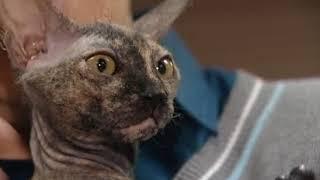 Клуб любителей кошек Маргоша Кэт
