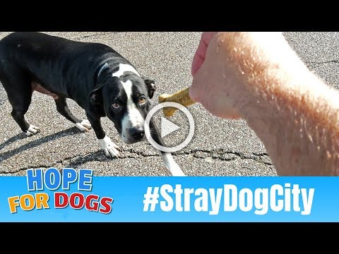 Hope For Hungry Homeless Stray Dogs In Houston #StrayDogCity