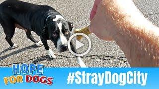 Hope For Hungry Homeless Stray Dogs in Houston #StrayDogCity