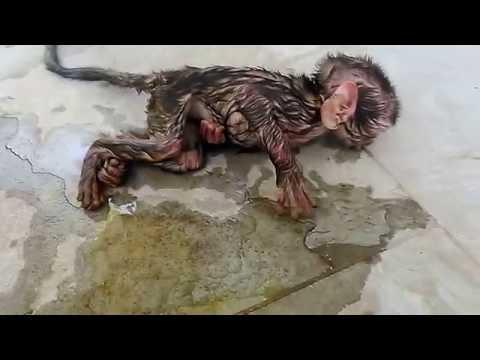 Jst born baby monkey rescue!!!!