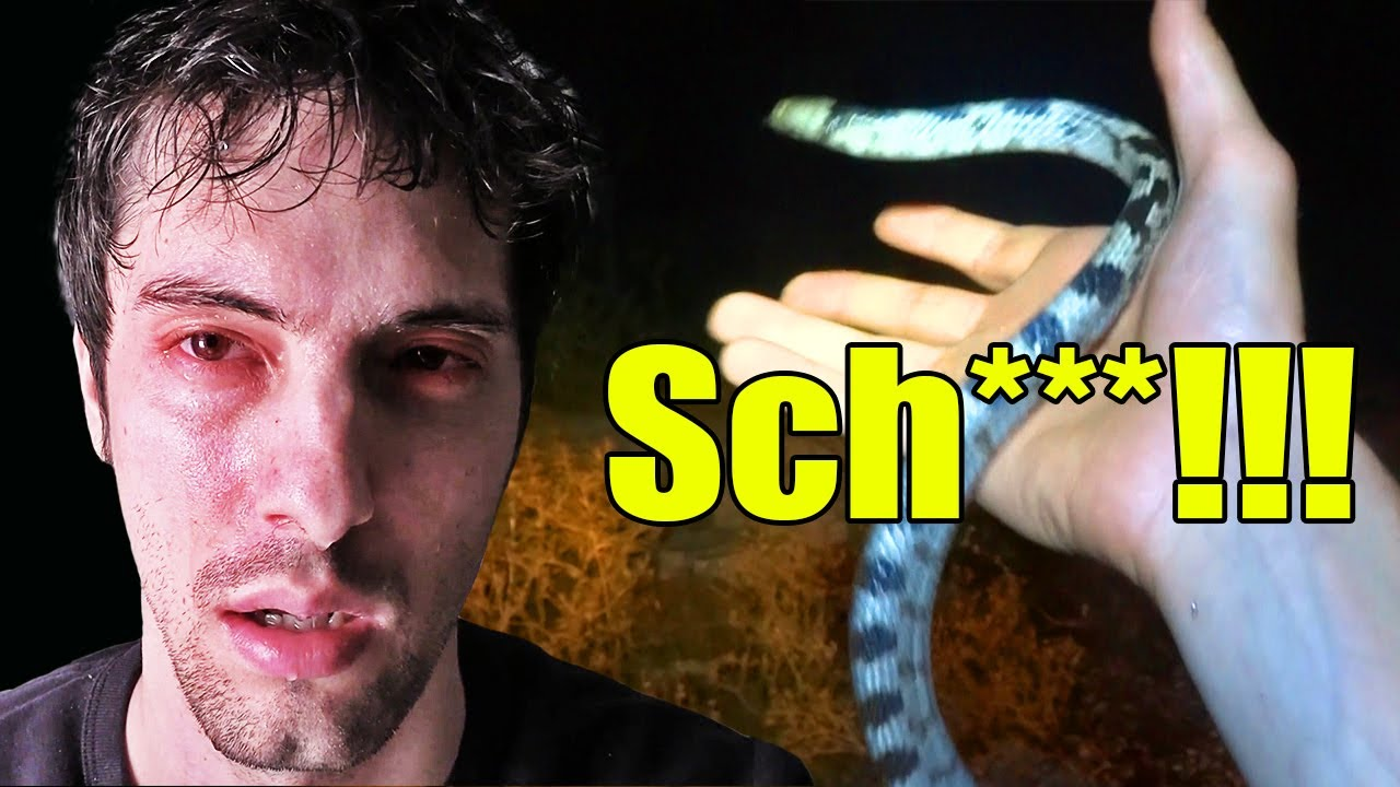 Download Giftige Schlange Europas hat mich gebissen - Das ist passiert