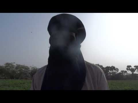 Producteur Blé à Agades