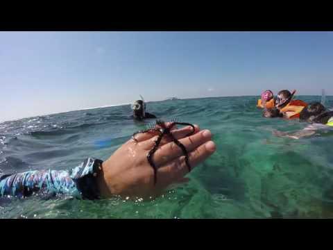 Snorkeling in BELIZE 2016