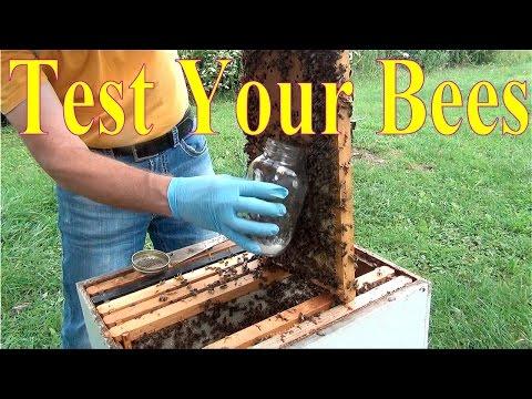 David Burns Beekeeping - 60 Second Beekeeper Episode 8 Testing For Mites