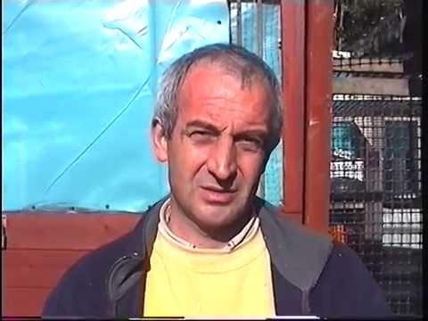 Video 226: Keith Morgan of Worksop: Premier Pigeon Racer