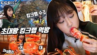 대왕킹크랩 직접 잡아봤습니다. 킹크랩,대게 10kg먹방 King crab Korean mukbang eating show