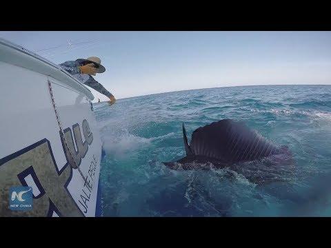 Marlin Fishing Tournament