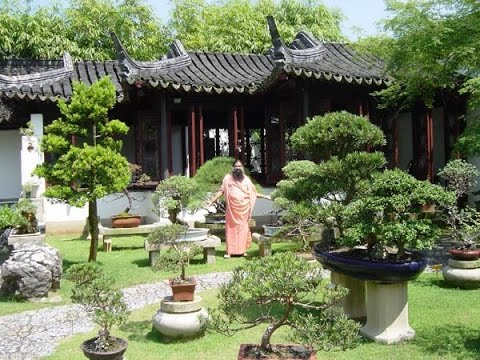 Beautify Your Garden Decor With Bonsai Plants