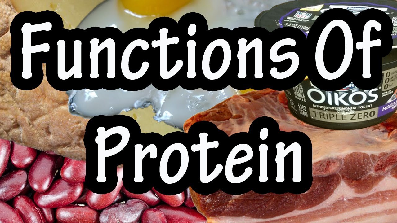 Proteins in food and their purpose 70