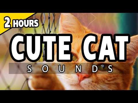 MEOWING CATS - Sounds to attract CATS - Sounds to annoy CATS