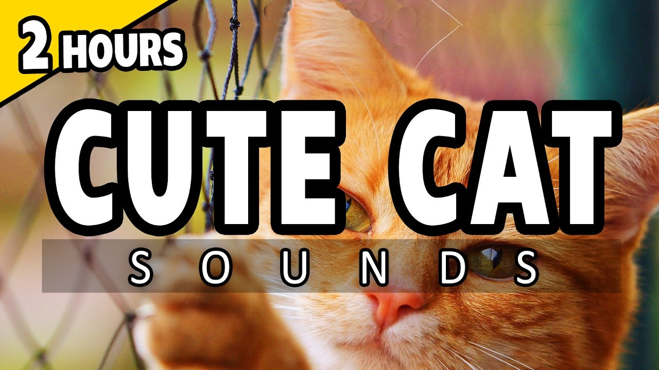 Music To Get Cats To Sleep