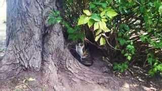 Кошка играет с белочкой в московском лесу