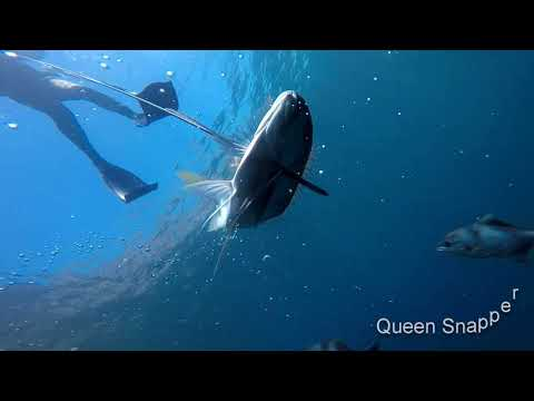 South Australia Spearfishing Craydiving, Enjoing The Waters Of S.A
