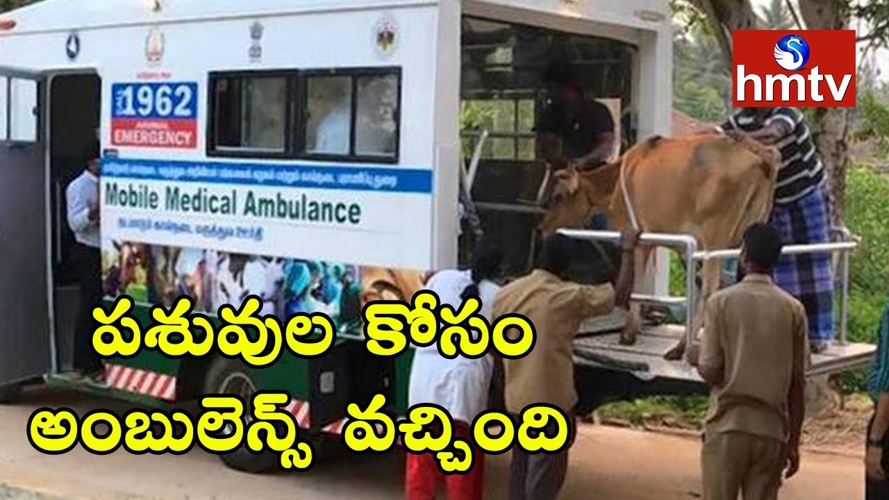 Telangana State Launches 1962 Ambulance Service For Cattle | HMTV