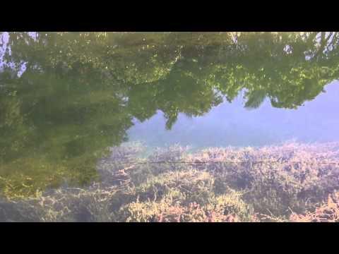 Clear Homestead Florida Canal.