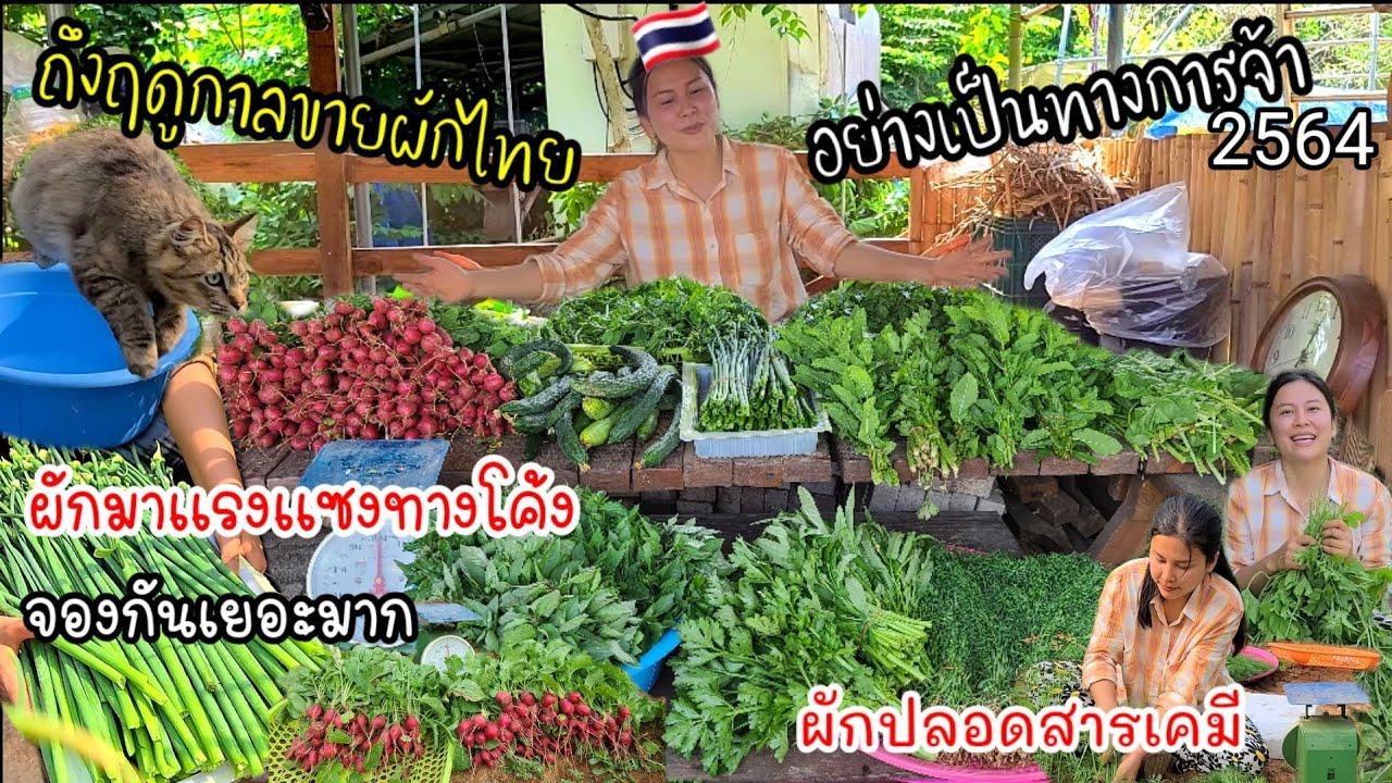 EP.525 ถึงฤดูกาลขายผักไทยอย่างเป็นทางการจ้า ผักยอดฮิต ทำลูกค้าเสียใจไปหลายคน เพราะซื้อไม่ทัน🤩