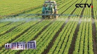 [中国新闻] 数说中国经济 科技护航农业可持续发展 | CCTV中文国际