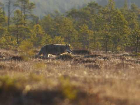 Estonia beautiful nature- Animals