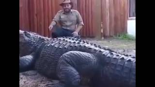 Biggest Gator In The World