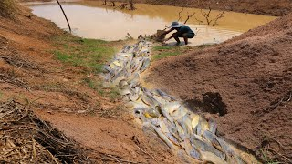 Amazing Fishing After Big Rain Smart Catch A Lot Of Fish When Water Flow Down To Pond tyriq 1256