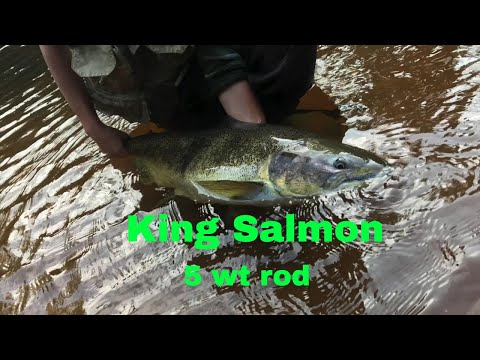 Fly Fishing For KING SALMON - 5 Wt Rod - Brule River
