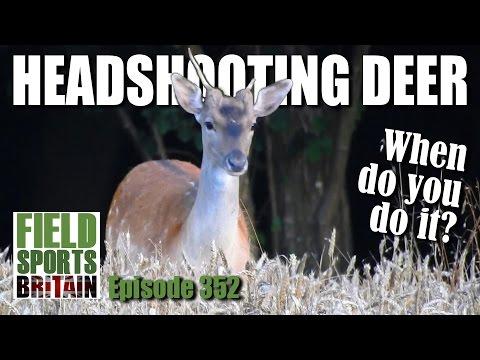 Fieldsports Britain - Headshooting Deer - when do you do it?