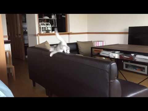 猫モノレール
