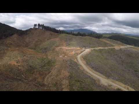 Logging east coast new zealand