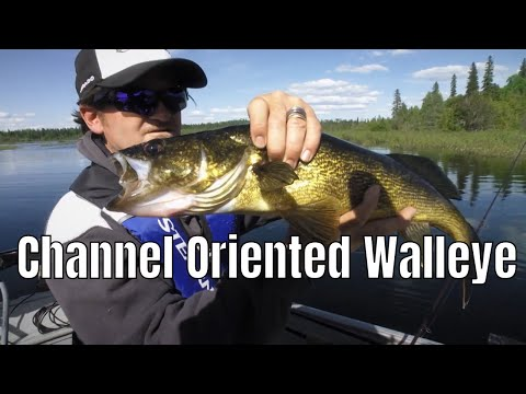 Channel Oriented Walleye | Fish'n Canada