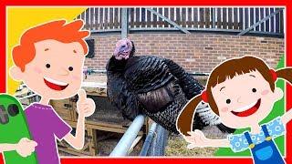 Dla dzieci  - Odwiedzamy Farmę. Angielska farma. Zwierzęta hodowlane. Indyki, kury, kozy, owce :)