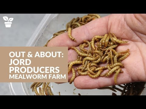 Out & About With Jord Producers:  Commercial Mealworm Farm