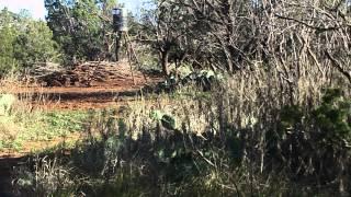 Texas Hog Hunt March 2015