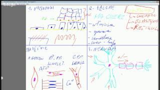 Darmowe Korepetycje z Biologii, spotkanie 12: Tkanki zwierzęce, bezkręgowce