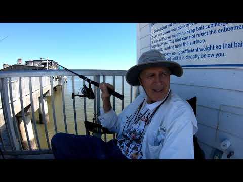 Fishing In The Gulf: The Bull Shark Of Cedar Key In 4k60p (S2E1)