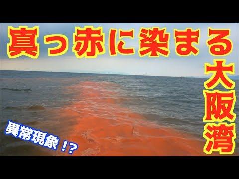 大阪の海で釣りをしたらとんでもない光景が・・・