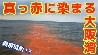 大阪の海で釣りをしたらとんでもない光景が・・・ thumbnail