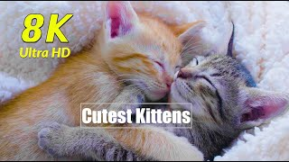 Cutest Kittens Cats in 8K UHD