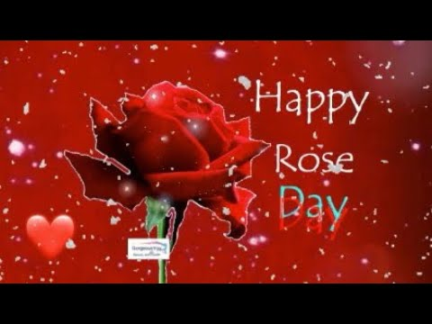 happy-rose-day-2019,rose-day-whatsapp-status-video,happy-valentine's-day-2019|gorgeous-you-|